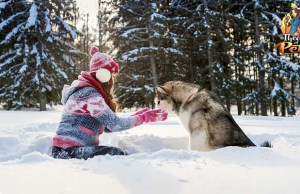How Seasons Affect Your Dog's Dietary Needs