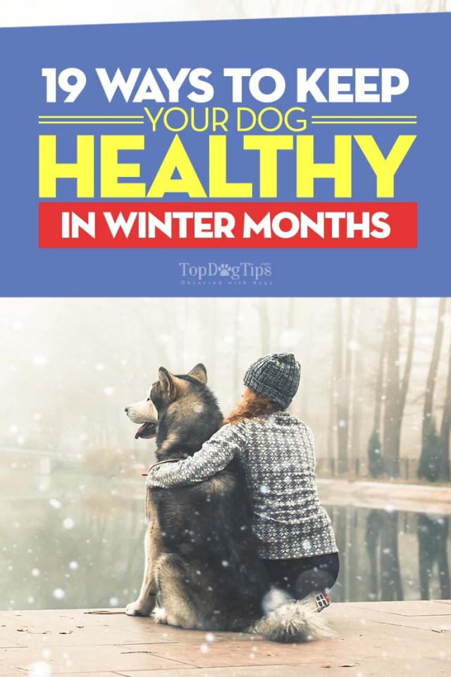How to Keep Dogs Healthy in Winter Months