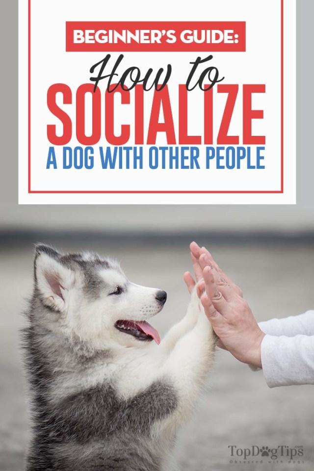 How to Socialize A Dog With Humans