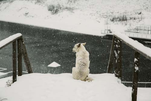 Know When Your Dog Is Cold