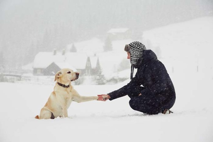 People Empathize More with Dogs than Humans