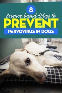 Science-based Ways to Prevent Parvovirus in Dogs