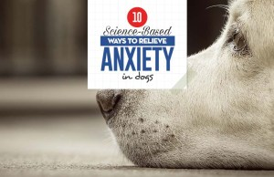 Science-based Ways to Relieve Anxiety in Dogs