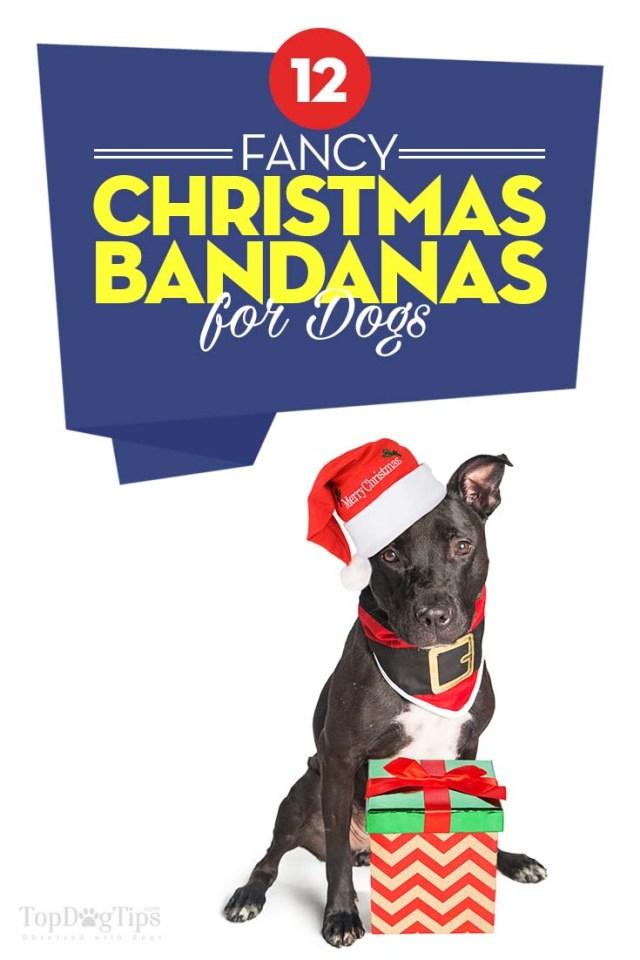 The Best Christmas Dog Bandanas