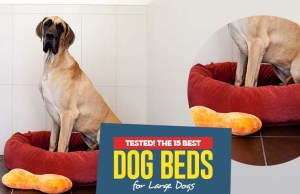 The Best Dog Beds for Large Dogs