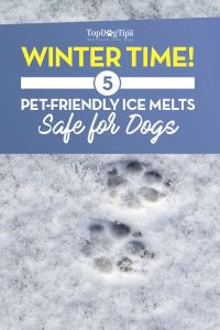 The Best Ice Melt Safe for Pets Outdoors