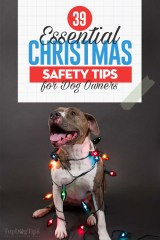 The Essential Dog Christmas Safety Tips for Pet Owners
