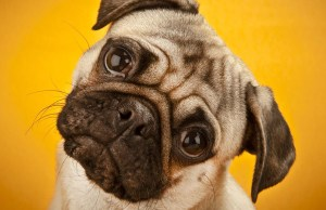 Understanding The Science and Psychology of Dog Language