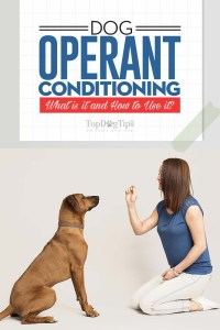 What Is Dog Operant Conditioning