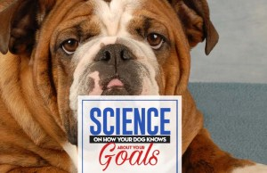 Your Dog Knows About Your Goals and Thinks They're Not Up to Snuff