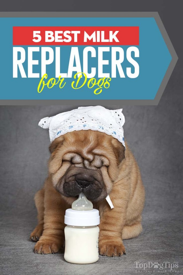 5 Top Rated Milk Replacer for Dogs