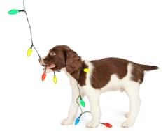 8 Ways to Puppy-proof Your Home for Christmas