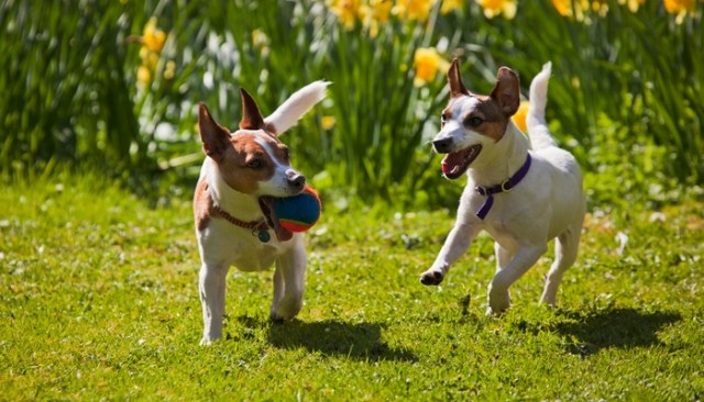 Most Active Dogs