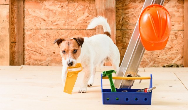 Best DIY Project Ideas for Dog Owners