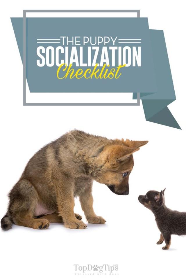 Checklist for Puppy Socialization