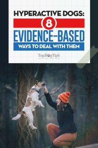 Evidence-based Ways to Deal with Hyperactive Dogs