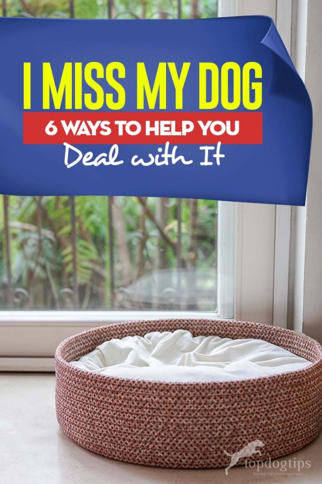 I Miss My Dog - Top 6 Ways to Help You Deal With It