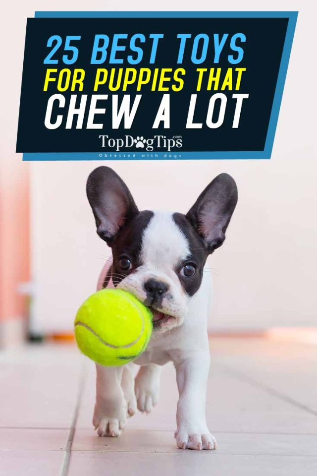 Top 25 Best Puppy Toys for Teething and Mental Stimulation of Puppies