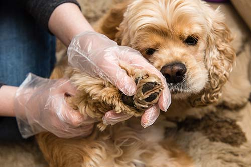 10 Ways to Prevent Lyme Disease in Dogs
