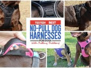 32 Top Rated Dog Harnesses for Dogs That Pull in 2018