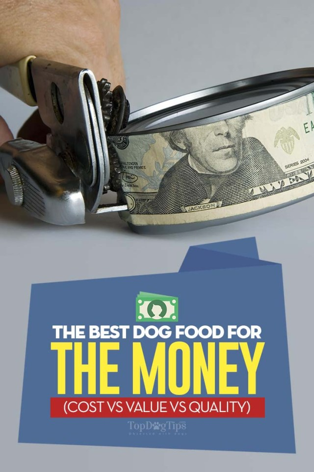 Best Dog Food for the Money (Cost vs Value vs Quality)