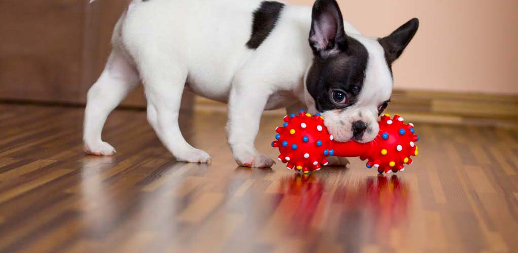 Best Dog Toy for Dogs