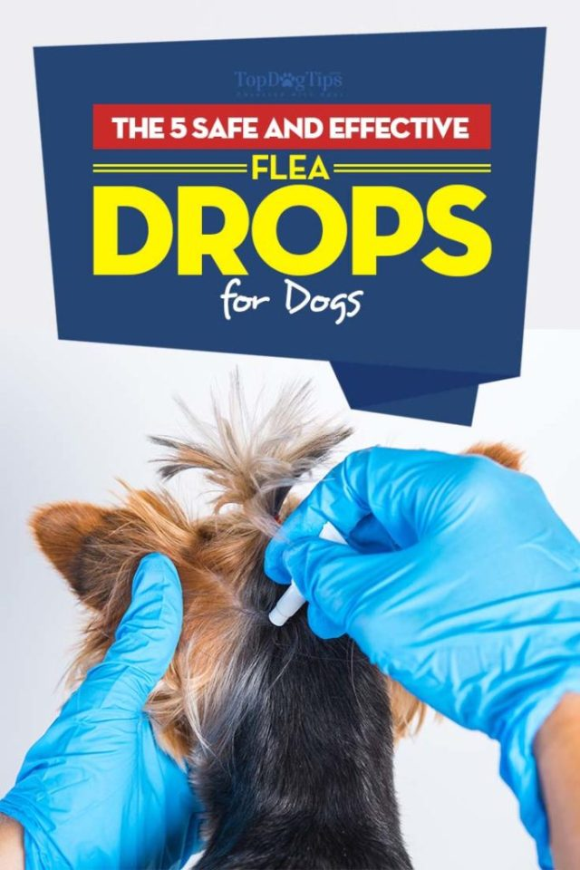 Best Flea Drops for Dogs That Are Safe and Effective