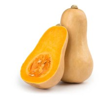 Best Human Foods for Dogs - Squash