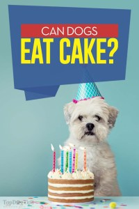 Can Dogs Eat Cake