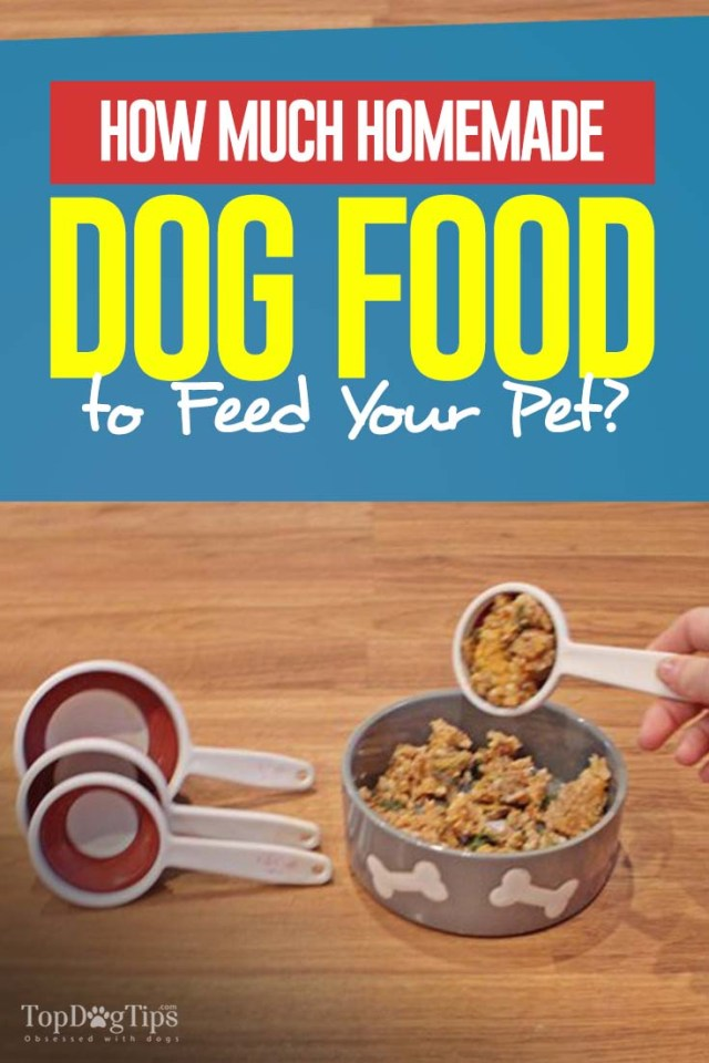 Detailed Guide on How Much Homemade Dog Food to Feed Your Dog