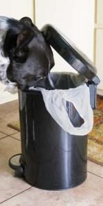 Dog going through garbage bin