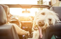 Go On A Vacation With Your Dog