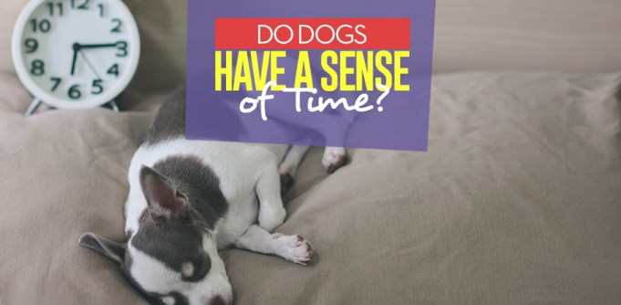 How Do Dogs Have A Sense of Time