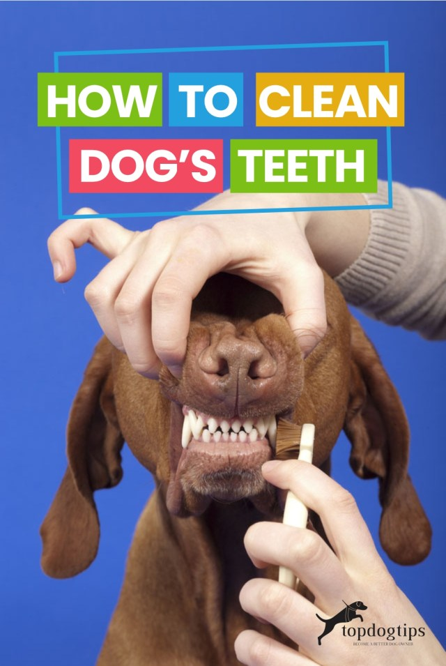How to Clean Dog-s Teeth