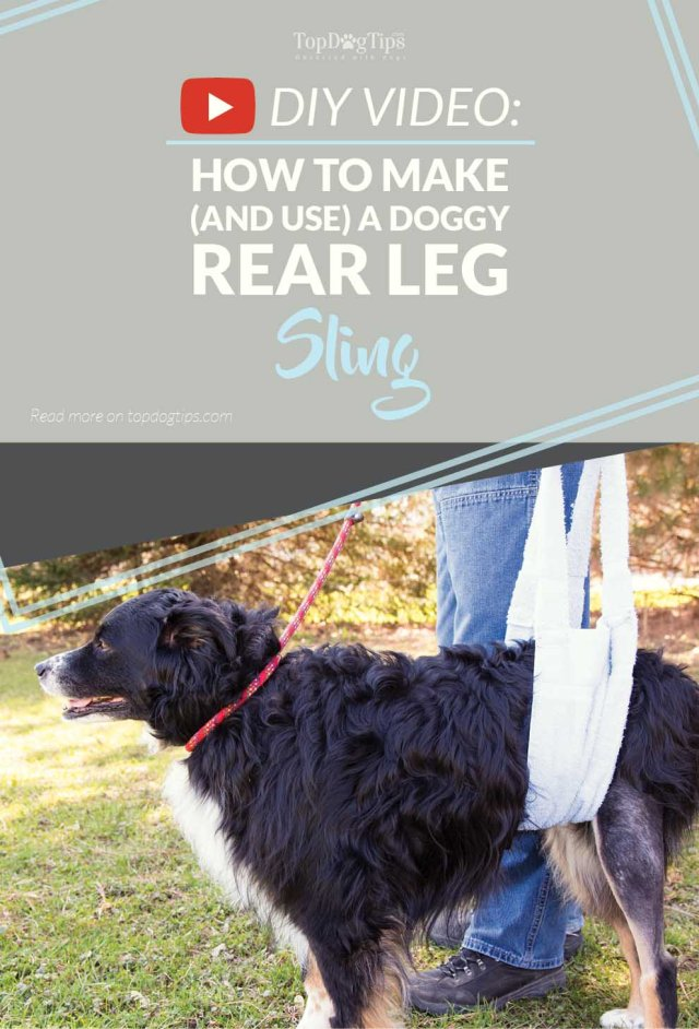 How to Make a Simple DIY Rear Leg Sling for Dogs