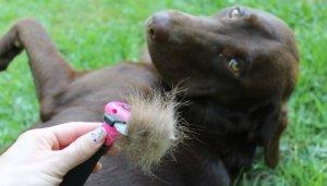 How to Minimize Shedding with Dog Deshedding Tools