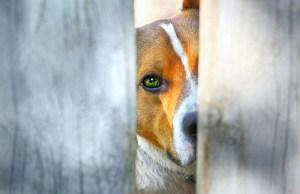 Sad dog behind a fence