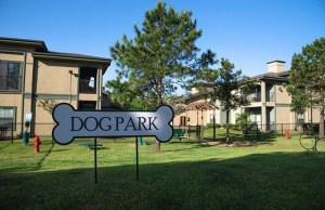 Seattle Builds Dog Park for Homeless Women