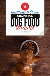 The 50 Best Grain Free Dog Food Brands (from best to worst)