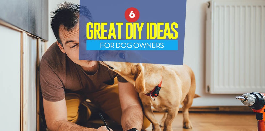 The 6 Best DIY Project Ideas for Dog Owners in 2018