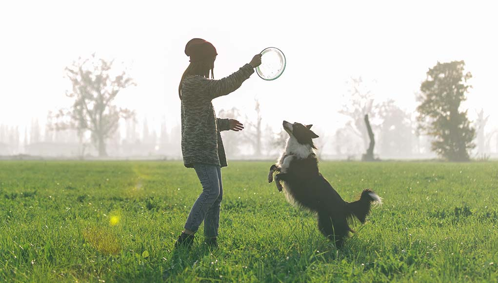 The Best Dog Frisbee Flying Disc Toys