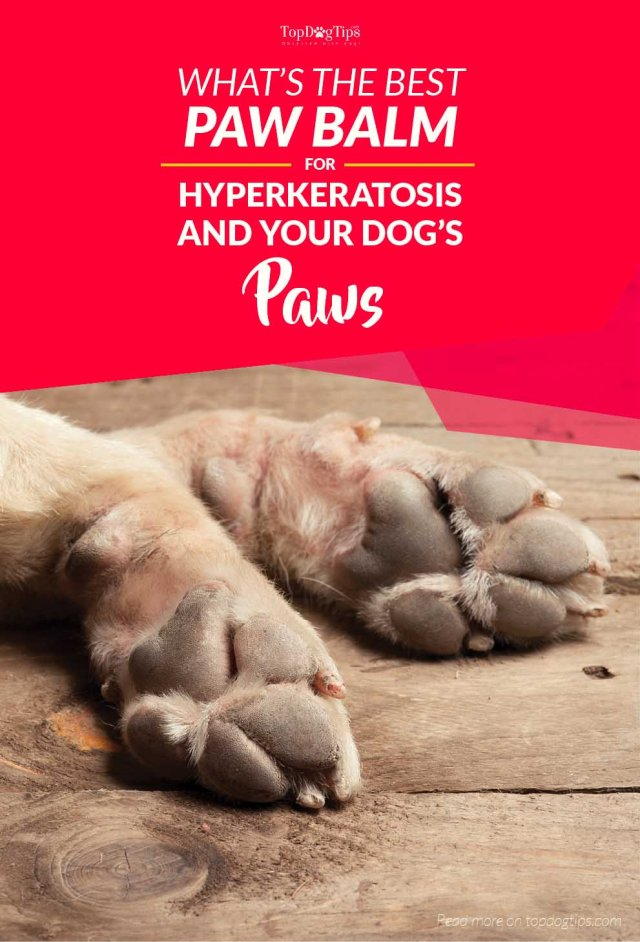 The Best Paw Balm for Dogs Paw with Hyperkeratosis and Other Conditions
