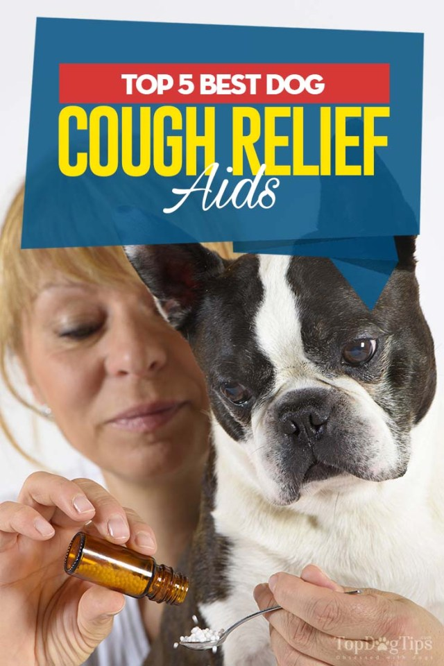 Top Rated Best Dog Cough Relief Aids