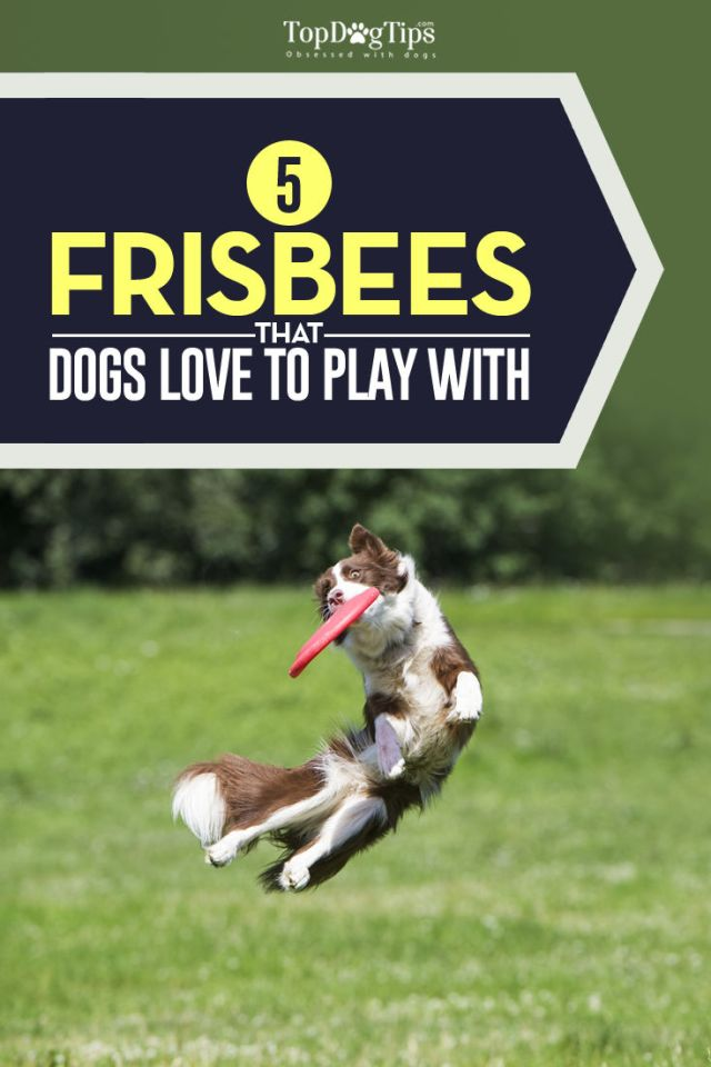 Top Rated Best Dog Frisbee Brands
