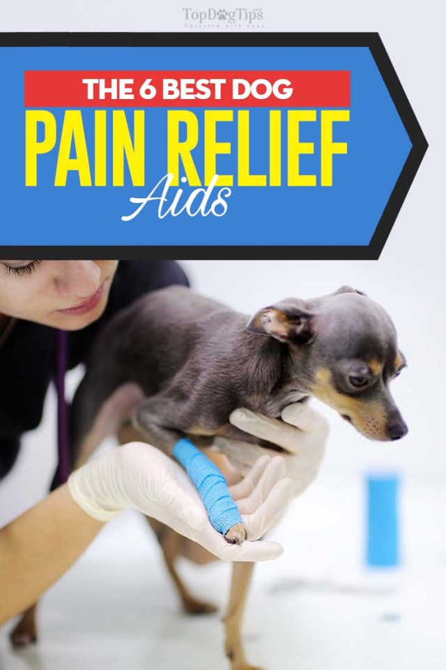 Top Rated Best Dog Pain Relief Aids