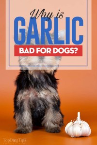 Why Is Garlic Bad for Dogs