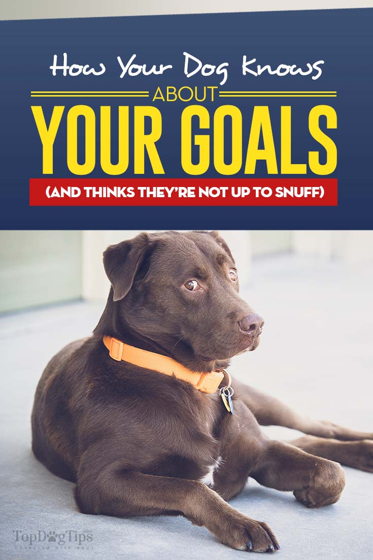 Your Dog Knows About Your Goals