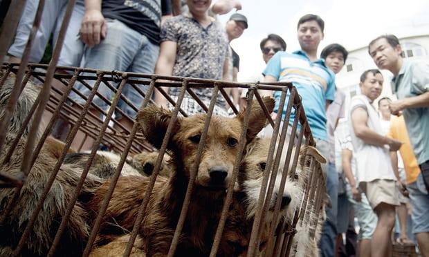 Pet Owner Kills Man Who Poisoned His Beloved Dog