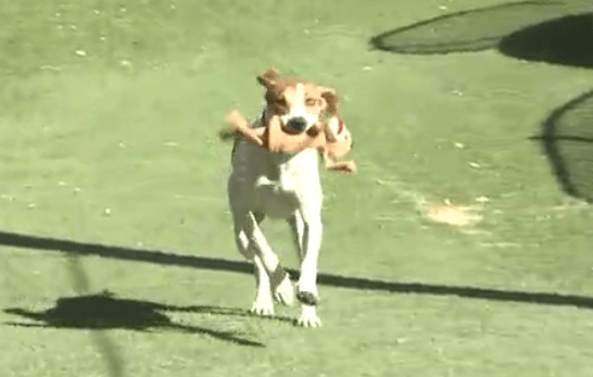"""""""Lucky"""" Dog Shot Survives Being Shot in the Head and Left in the Desert"""