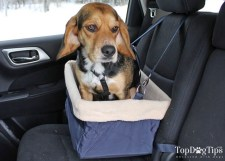 One of the many pet seats being tested by Molly.